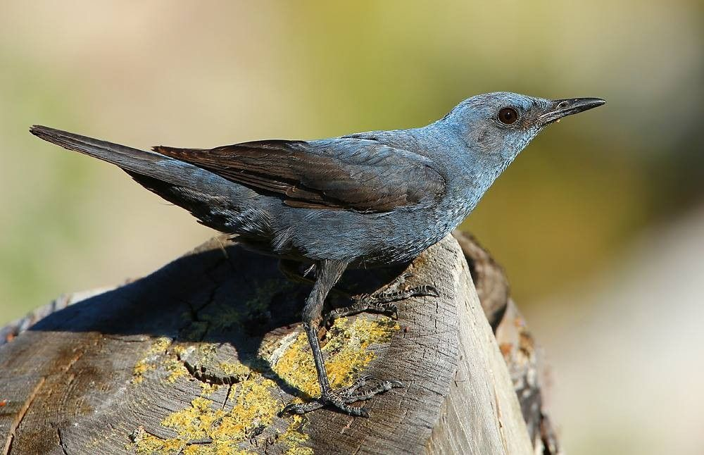 Entre Alpilles, Crau et Camargue, initiation aux oiseaux d'hiver