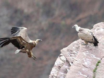 A la découverte des oiseaux en migration du Pays Basque