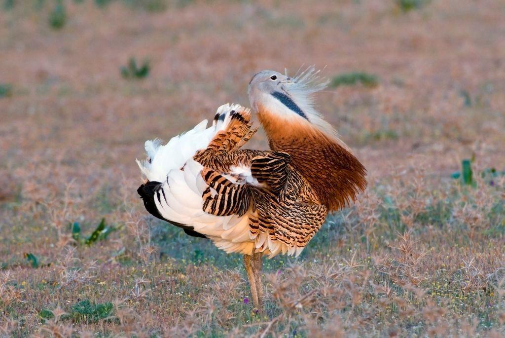 Estremadure : le paradis des oiseaux