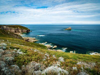 Oiseaux marins et landes de Bretagne