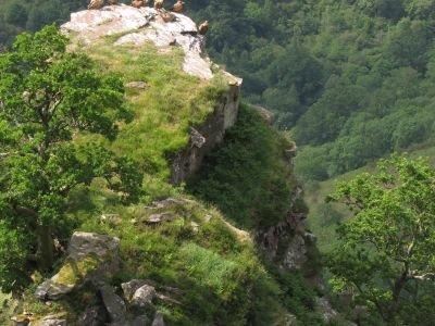Initiation à l'ornithologie dans les Pyrénées