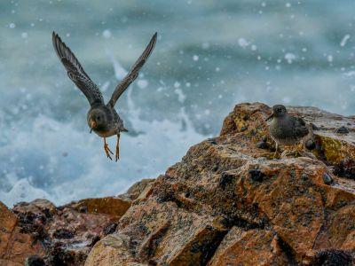La presqu'île aux oiseaux