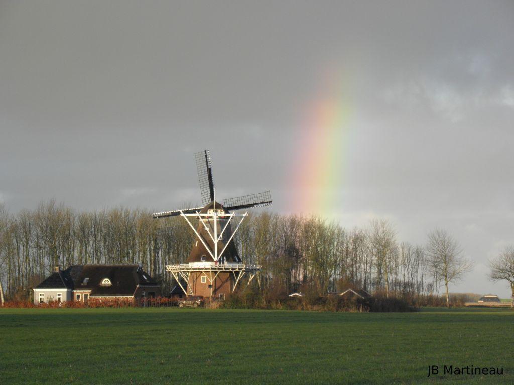 Voyage ornithologique aux Pays-Bas