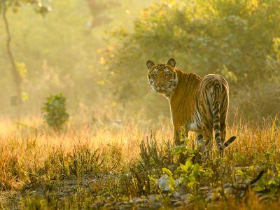 Safari Photographique en Inde