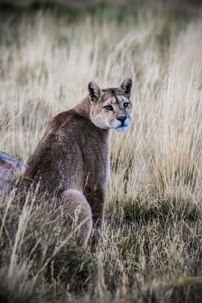 Pumas, glaciers et couleurs d'automne