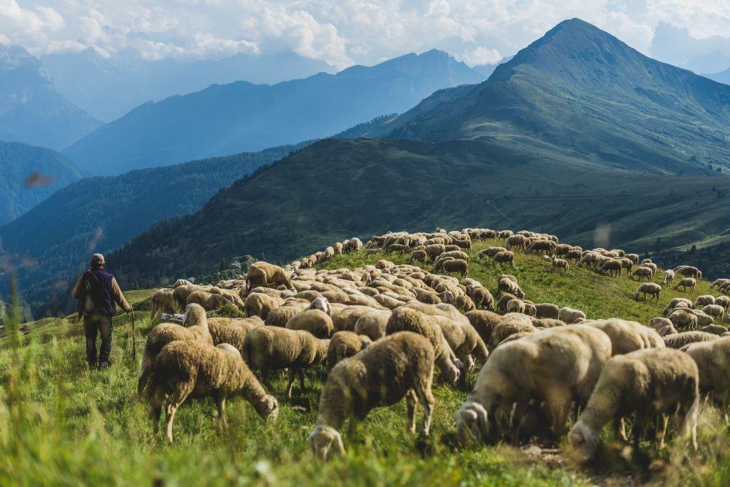Berger et son troupeau dans les Alpes du Sud